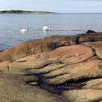 tylon-with-swans